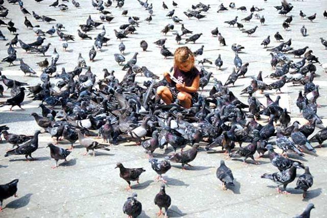 Мэр Магадана ввел штрафы за кормление голубей (2 фото)