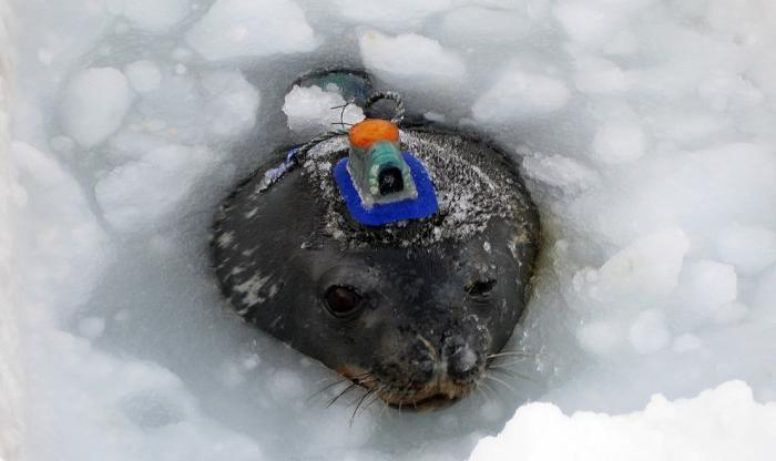Фото-путешествие в Антарктиду (29 фото)