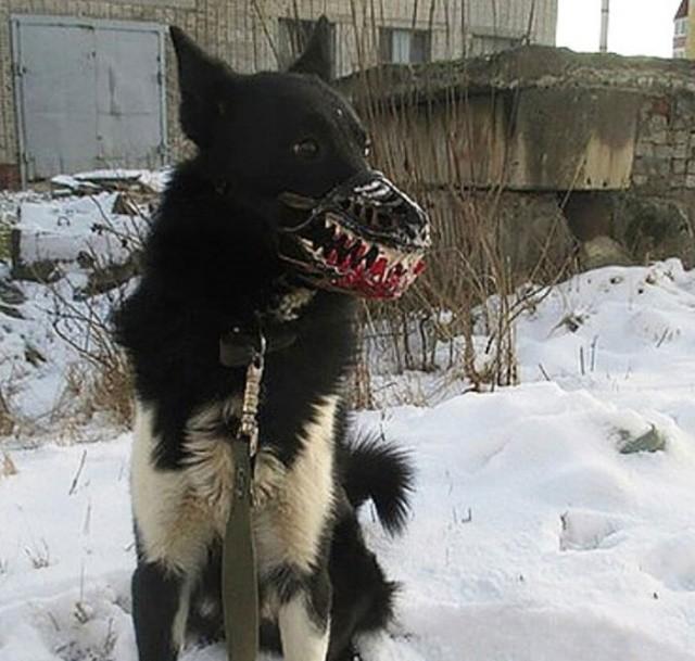 """""""Не бойтесь, собака не кусается"""" (24 фото)"""