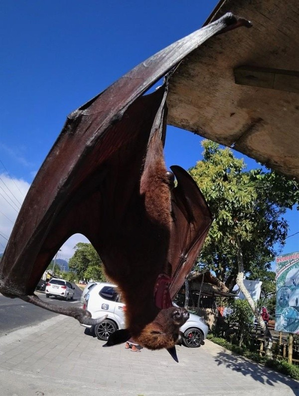Какие милые питомцы живут на Бали (7 фото)