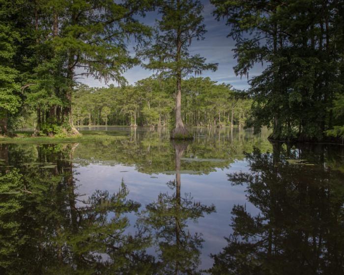 Великое Мрачное болото (37 фото)