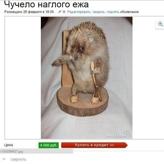 Сборник смешных объявлений (19 фото)