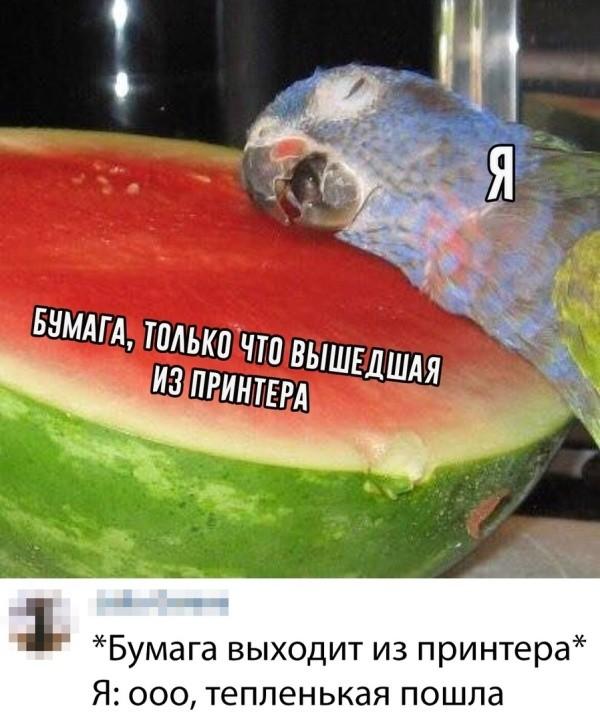 Подборка прикольных фото (60 фото) 22.07.2019