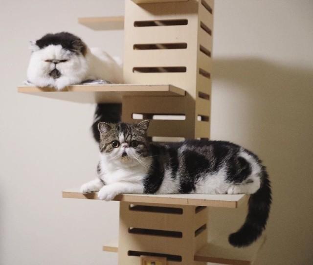 """Очаровательный кот в """"галстуке"""" (12 фото)"""