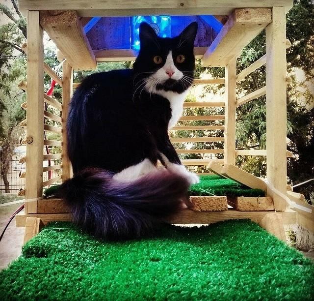 Самый счастливый дворовой кот Волгограда (8 фото)