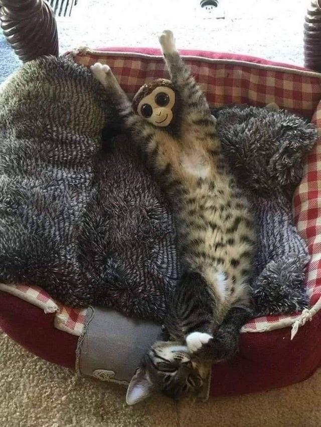 Кот и игрушечная обезьянка запустили новый масштабный батл (12 фото)