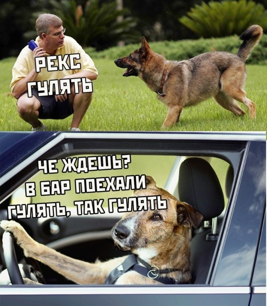 Подборка прикольных фото (65 фото) 29.07.2019