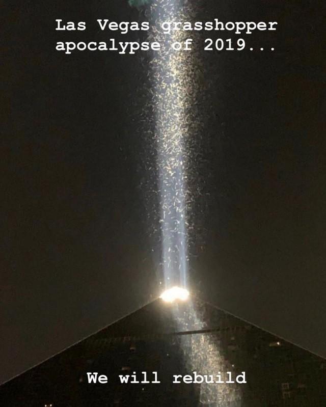 Страх и кузнечики в Лас Вегасе (9 фото)