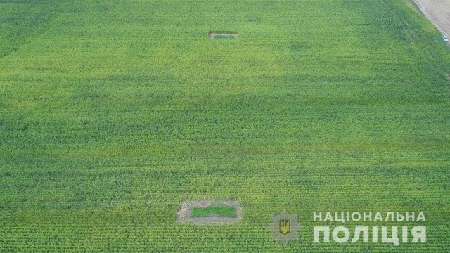 Странные насаждения в поле на Буковине (4 фото)