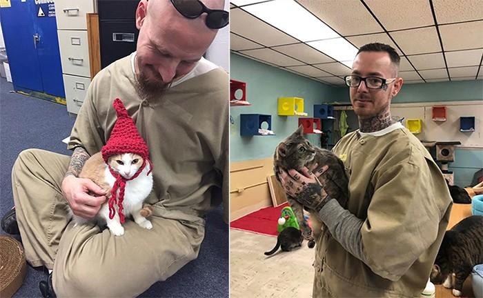 В тюрьме решили открыть приют для бездомных кошек (8 фото)