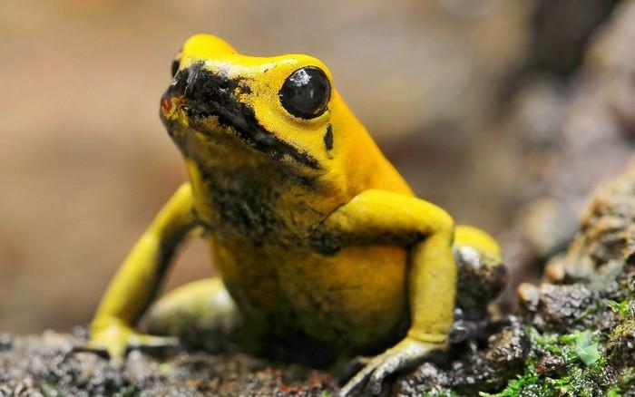 Топ-10 крошечных существ, которые могут убить человека