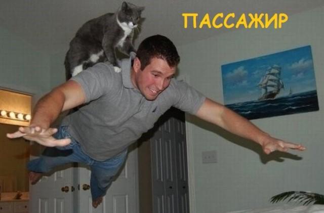 Такие разные и забавные котики (37 фото)