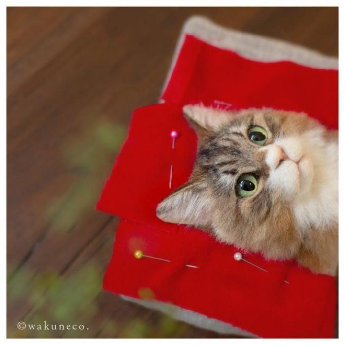 Новый японский тренд – 3D-портреты кошек (21 фото)