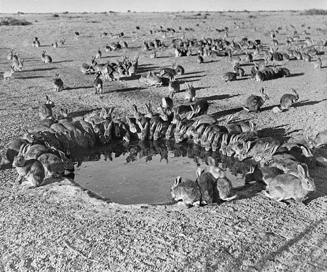Подборка редких исторических фотографий (19 фото)