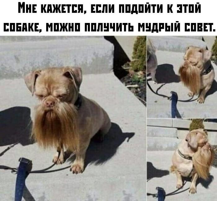 Подборка прикольных фото (60 фото) 21.08.2019