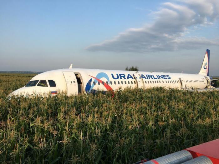 Житель Саратова продает кукурузу с места жесткой посадки A-321(2 фото)