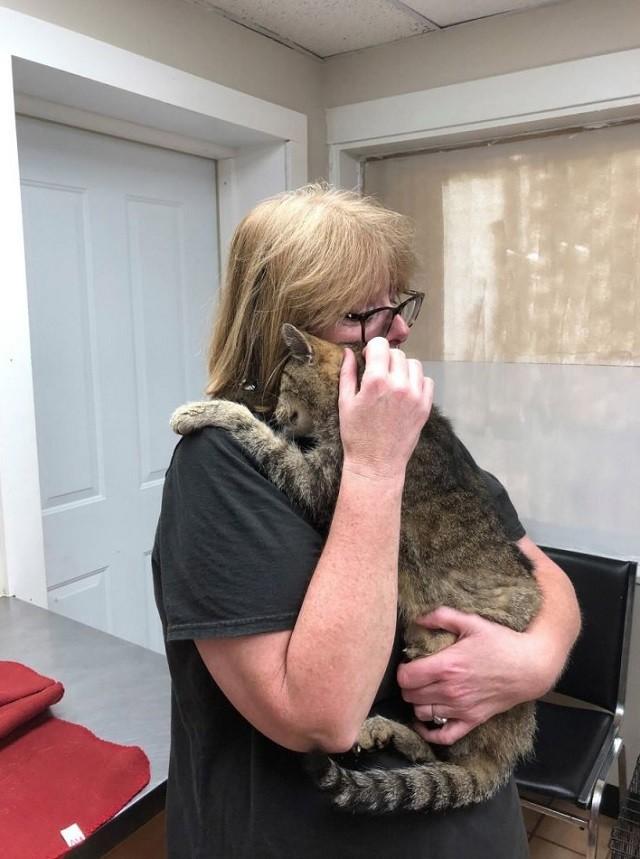 Кот-скиталец вернулся домой после 11 лет странствий (4 фото)