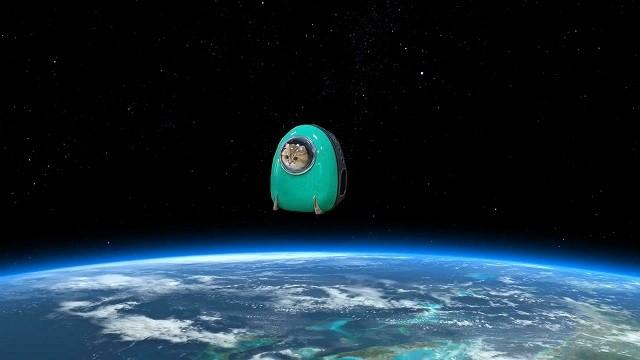 Кот Хосико - космический путешественник из Москвы (22 фото)