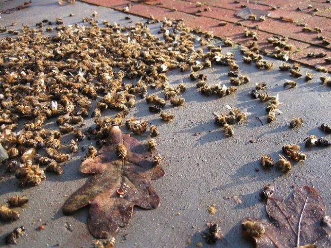В Бразилии погибло полмиллиарда пчел в течение трех месяцев (9 фото)