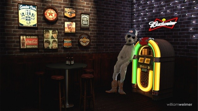 Хенни - харизматичный и брутальный пес (14 фото)