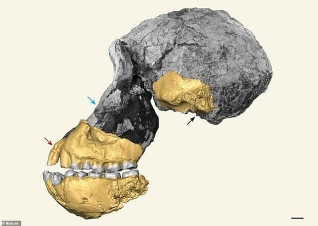 Ученым удалось воссоздать портрет предка человека (8 фото)