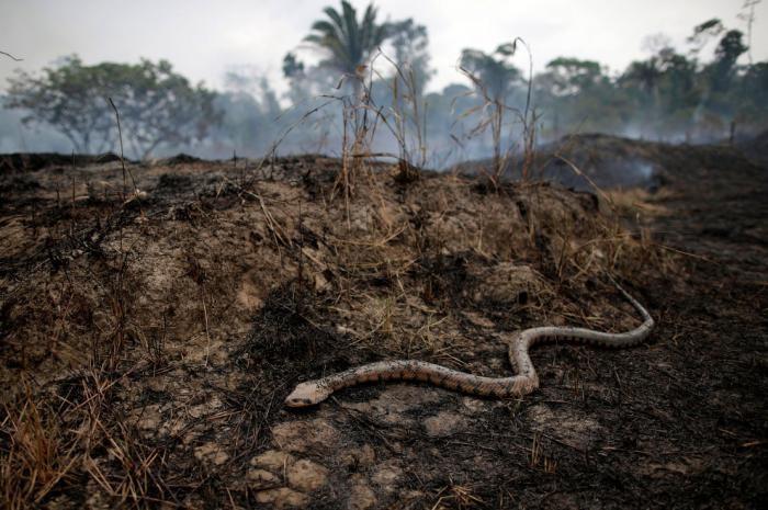 Горят Амазонские леса «легкие планеты»(20 фото)