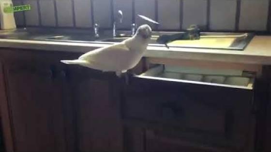 Дорогая, на ужин будет суп из птицы! (видео)