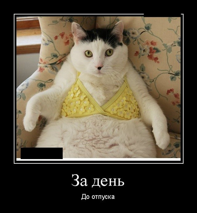 Демотиваторы 09.09.2019 (20 фото)