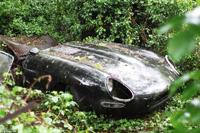 Возрождение винтажного Jaguar,который 30 лет гнил в зарослях (20 фото)