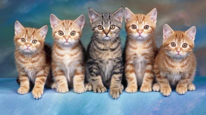 Китайцы смогли клонировать котёнка по заказу клиента (2 фото)
