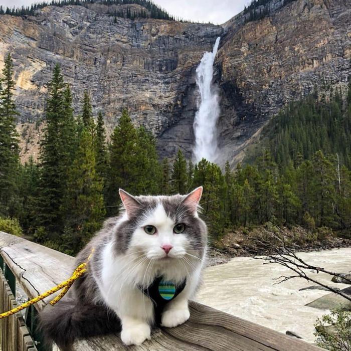 Канадский кот путешествует и ведёт свой Инстаграм (20 фото)