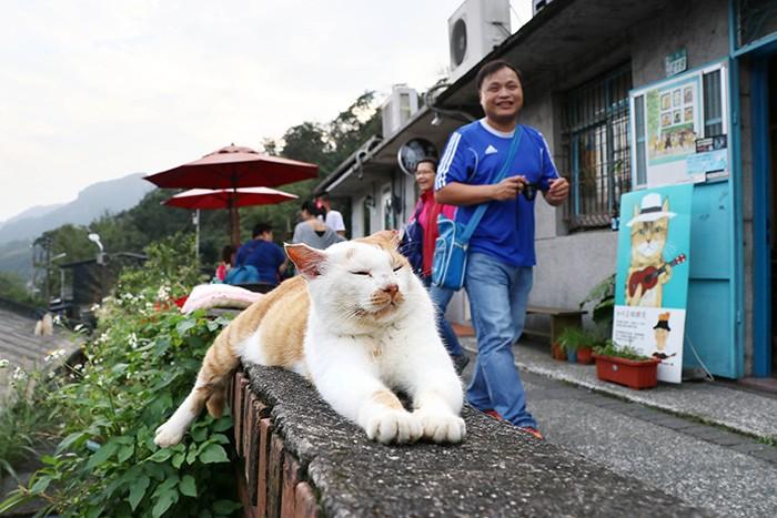 Деревня в Тайване, которую кошки спасли от запустения (9 фото)