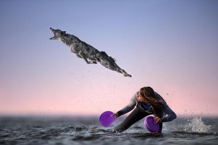 Фотошоперы принялись за пса, который ловит фрисби (18 фото)