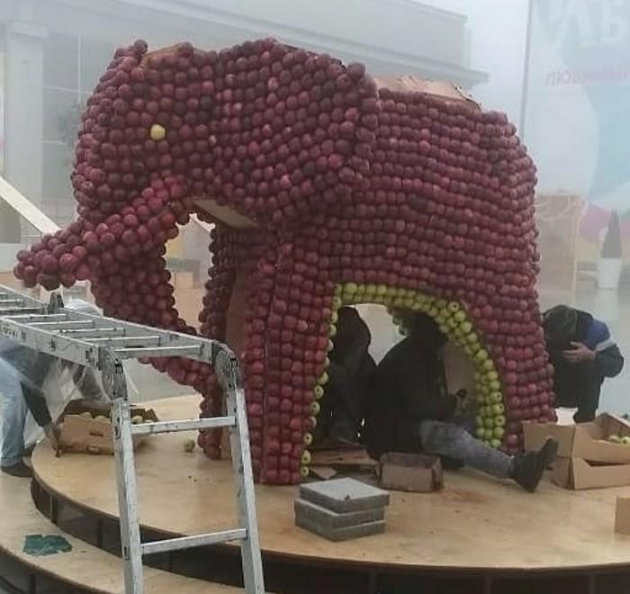 Жители Ставрополя разграбили слона из яблок (7 фото)