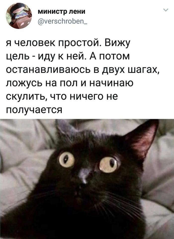 Подборка прикольных фото 25.09.2019 (65 фото)