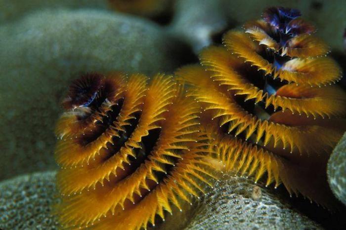Подводный мир (39 фото)