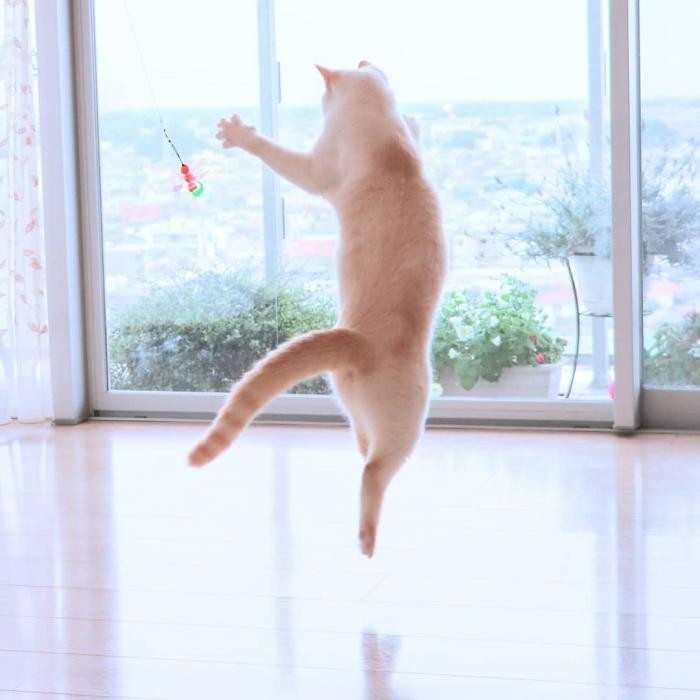 Чако и Сузука: коты, покорившие сеть своей грациозностью (18 фото)