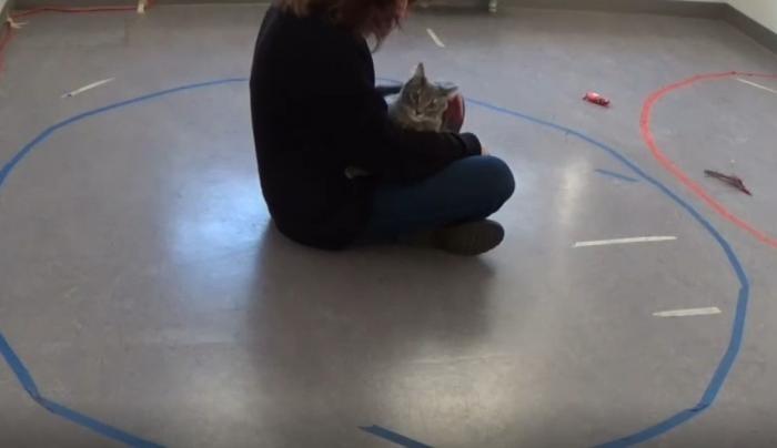 Ученые выяснили, как кошки относятся к людям (7 фото)