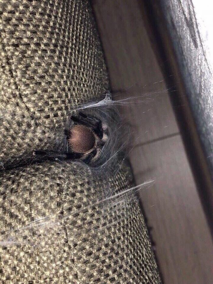Жуткий сюрприз в диване на съемной квартире (5 фото)