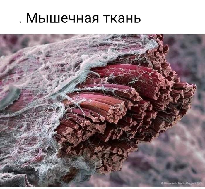 Окружающий мир под микроскопом (24 фото)