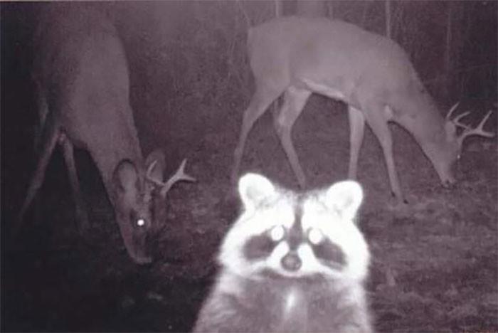 Эти животные заставят тебя страдать (20 фото)