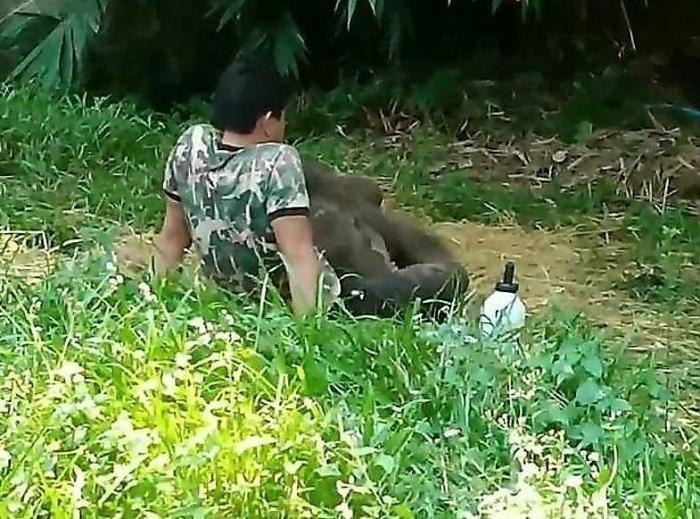 Стадо отвергло слоненка, спасенного из болота (2 фото)
