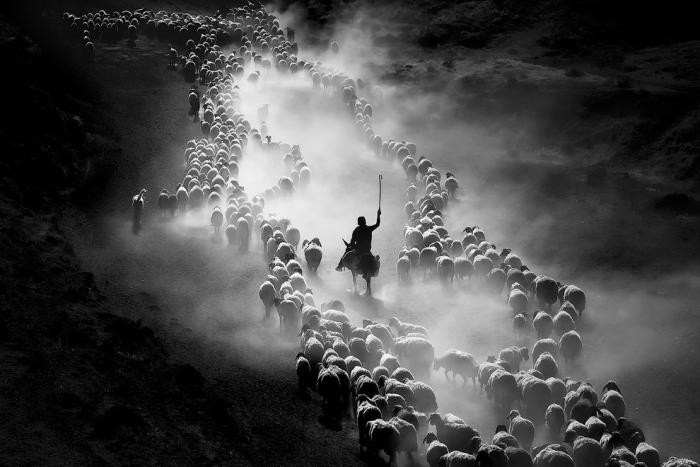 Sony World Photography Awards 2020 (22 фото)