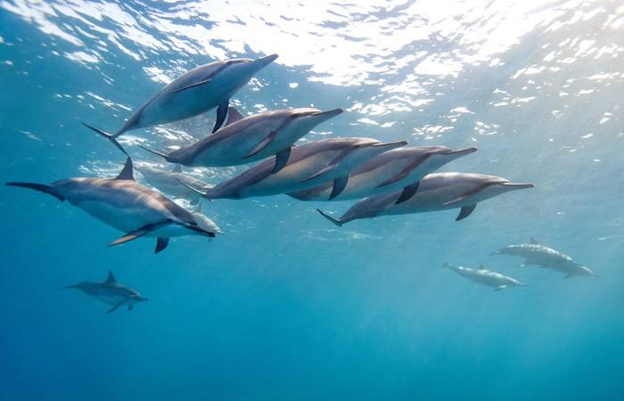 Дельфины – уникальные жители нашей планеты (7 фото)