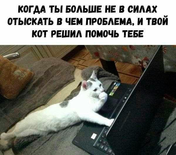 Подборка прикольных фото (63 фото) 10.10.2019