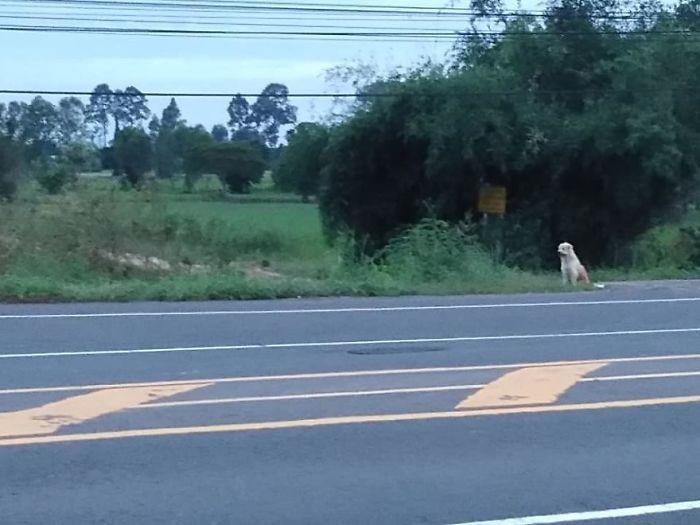 Забытая собака 4 года ждала хозяев на одном и том же месте (13 фото)