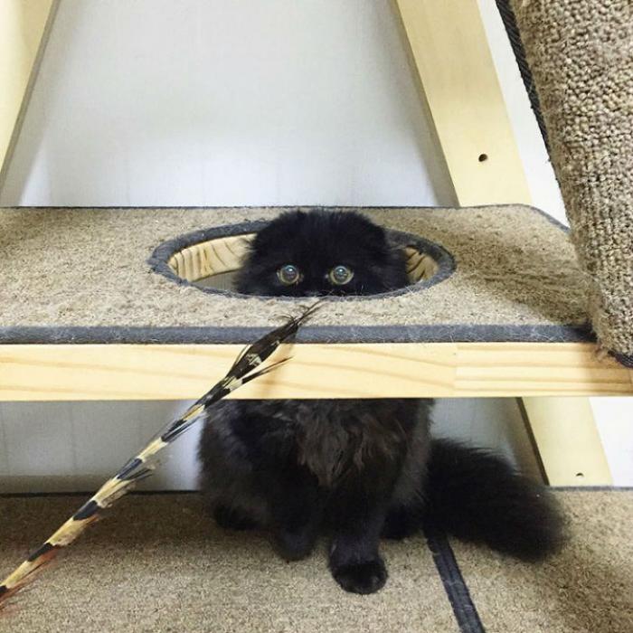 Котик, который всегда в шоке (17 фото)