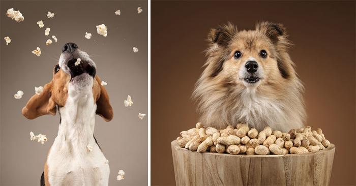 Собаки реагируют на еду (10 фото)