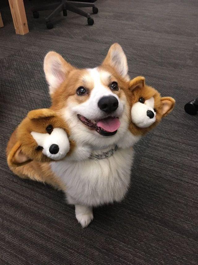 Хозяева собак придумали новый тренд для хэллоуинских костюмов (10 фото)