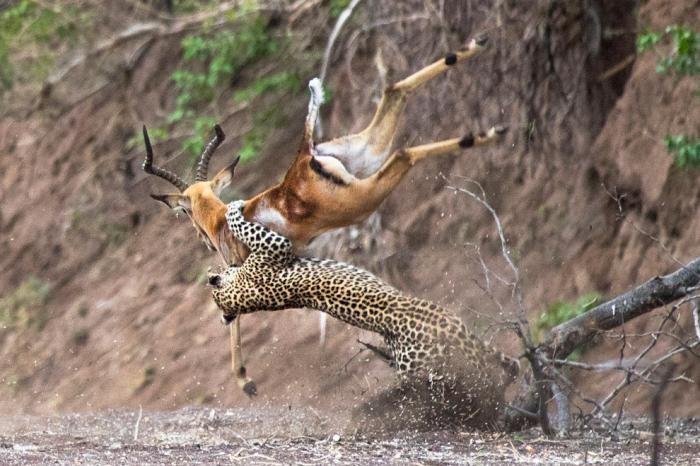 Животные в фотографиях (20 фото)